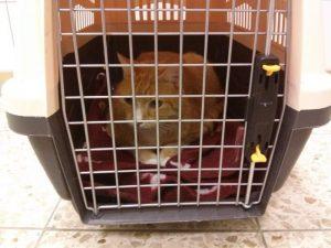 Transportbox für Katze