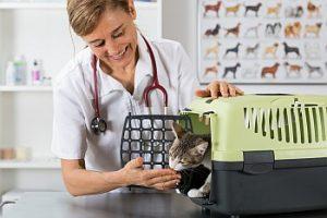 Katze in Katzenbox beim Tierarzt
