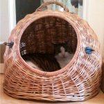 Katze sitzt in Weidenkorb