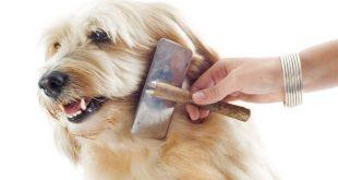 Hund wird mit Hundebürste gekämmt
