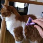 Furminator Katze im Einsatz an Fellnase