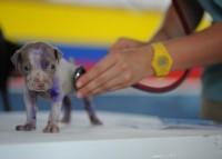 Hund bei Tierarzt