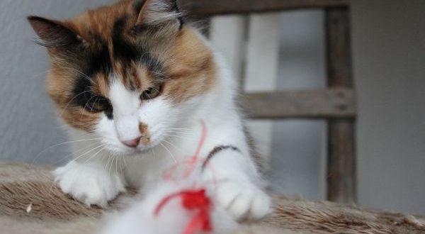 Tierfotografie Katze
