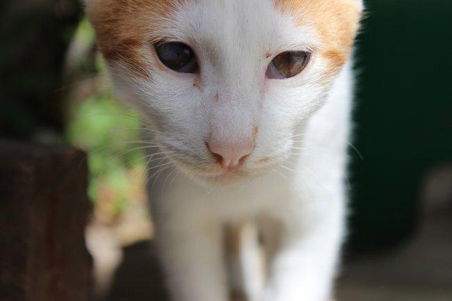 strassenkatzen-lefkas1