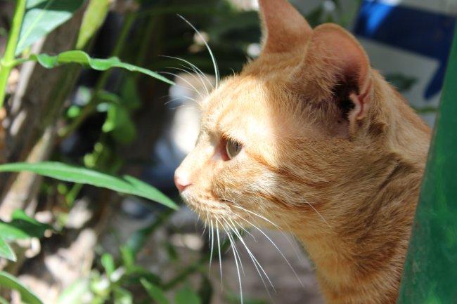 strassenkatzen-lefkas2