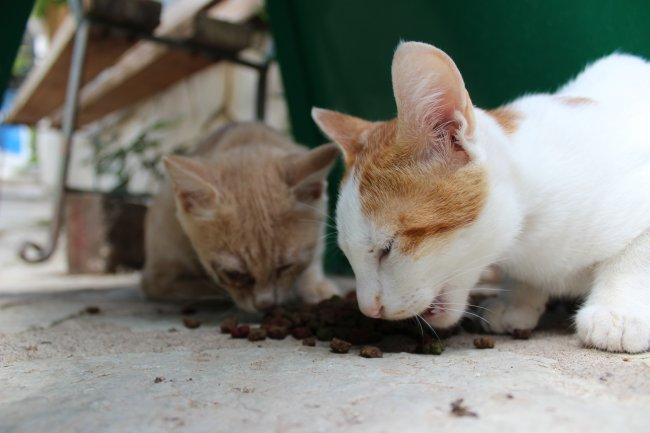 strassenkatzen-lefkas3