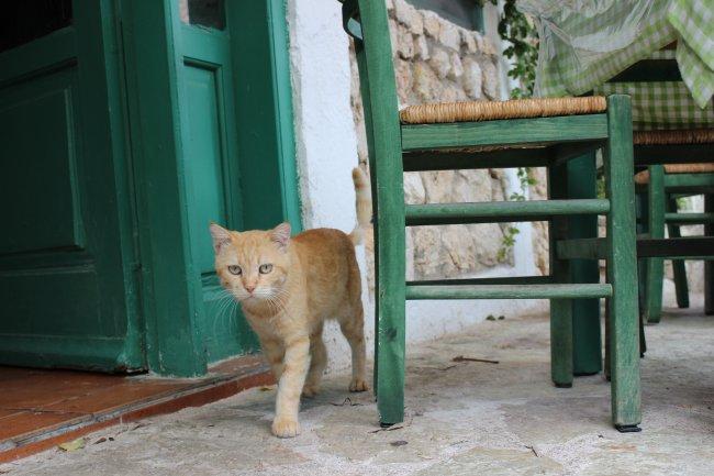 strassenkatzen-lefkas4
