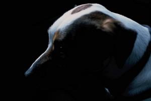 Hund im Dunkeln kaum zu sehen