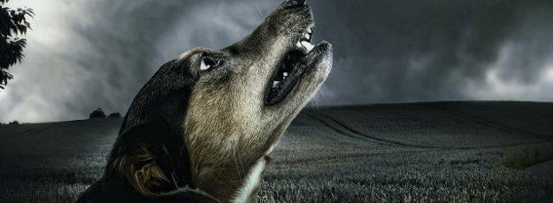 Hund heult im Dunkeln