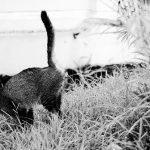 Katze markiert in Garten