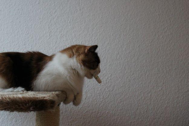 Katze spielt mit Tampon