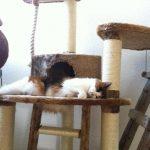 Katze schläft auf Kratzmöbel