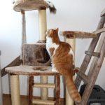 Zwei Katzen auf Kratzbaum