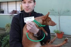 Tierschützer mit gerettetem Podenco