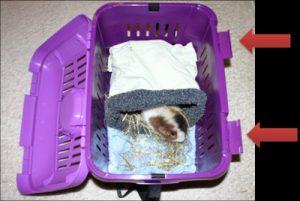 Transportbox mit Meerschweinchen und roten Pfeilen auf Scharniere