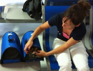 2 Katzen in Transportboxen am Flughafen