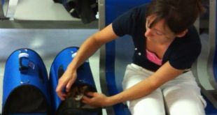 Katzen am Flughafen in Transportbox