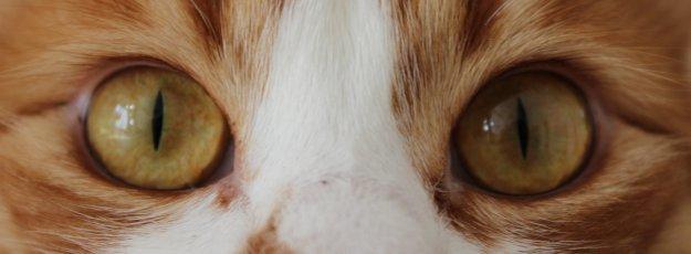 katzensprache durch katzenaugen