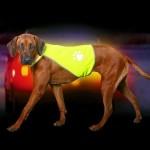 Hund mit Warnweste vor Auto im Dunkeln