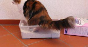 Katze benutzt Katzenklo