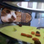 Katze schaut auf Futter in Labyrinth