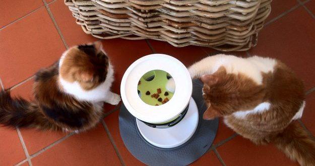 2 Katzen spielen an Snackstation