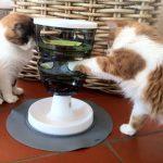 Katzen spielen mit Futterlabyrinth