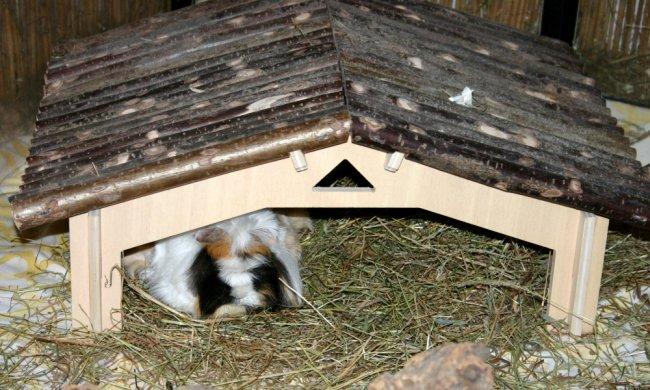 meerschweinchenhaus meeriport von getzoo im test. Black Bedroom Furniture Sets. Home Design Ideas