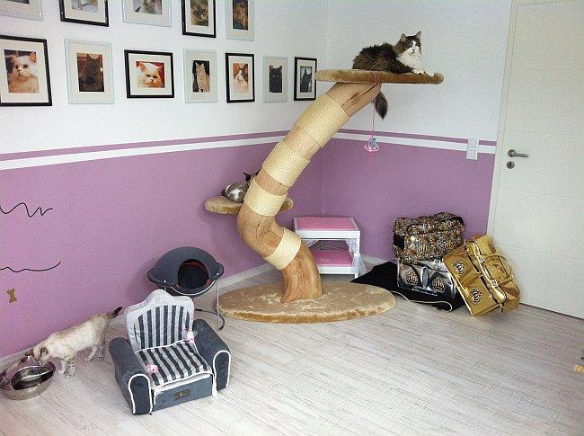 Luxuszimmer für Katzen