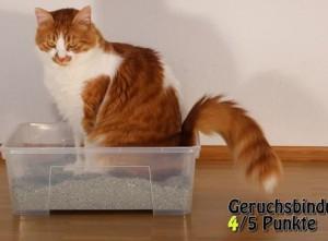Katzenstreu in Katzenklo von Katze getestet