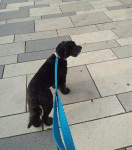 halsbandset-dog-accessoires-hund