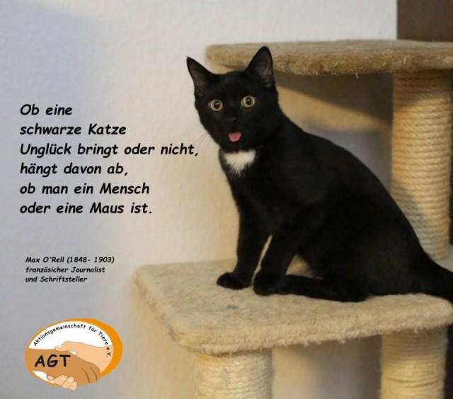 Schwarze Katze auf Kratzbaum, maunzt