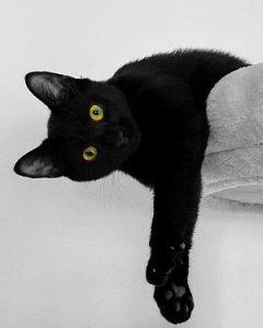 Schwarze Katze liegt auf Kratzbaum