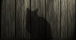 Schwarze Katze Schattenwurf
