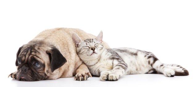 hunde-katze-bett