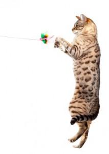 Katze fängt Spielzeug-Beute