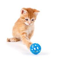 Katze spielt mit Ball