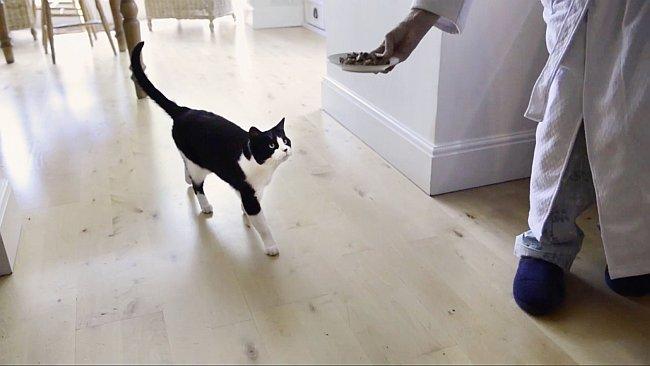 Katze wird gefüttert