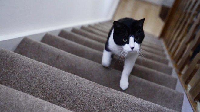 Katze läuft Treppe hoch