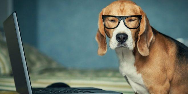 Hund mit Brille vorm PC