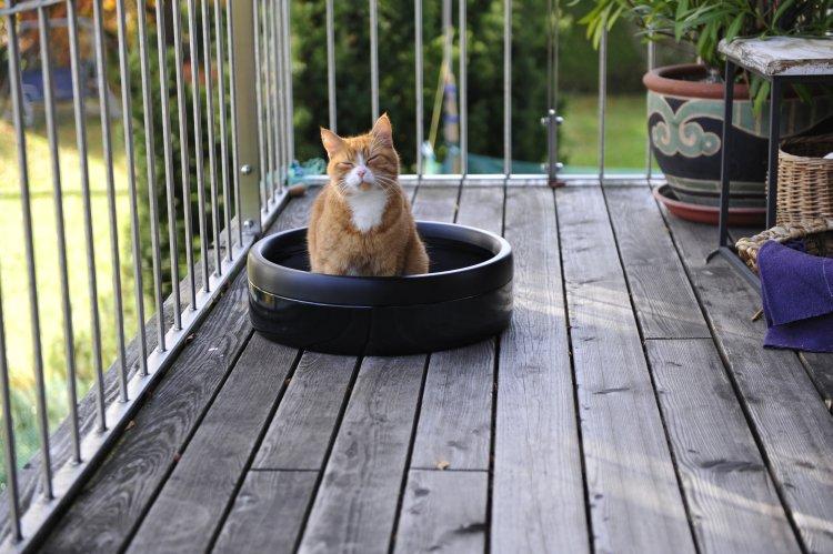 Katze benutzt katchit Katzentoilette
