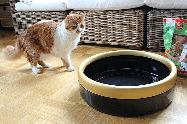 Katze testet Katzentoilette