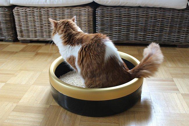 Katze benutzt runde Katzentoilette