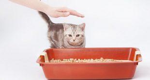 Katze testet Klo mit Katzenstreu