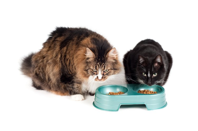 2 Katzen am Futternapf