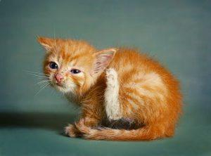 Grasmilben Befall Katze