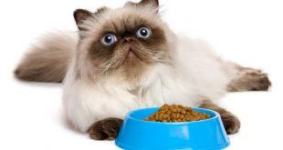 Katzenfutter im Napf