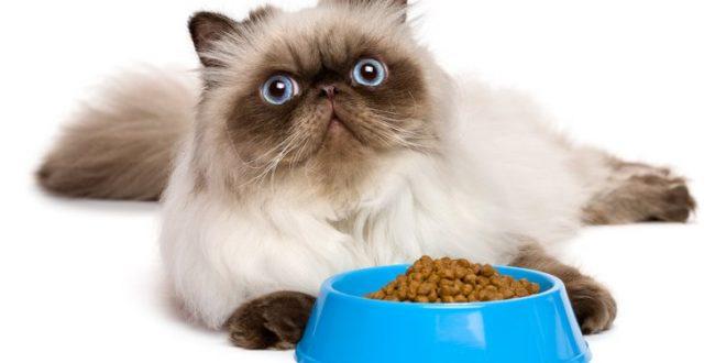 liste was katzen besser nicht fressen sollten. Black Bedroom Furniture Sets. Home Design Ideas