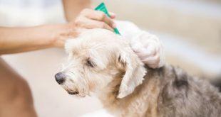 Hund erhält Spot-on gegen Parasiten