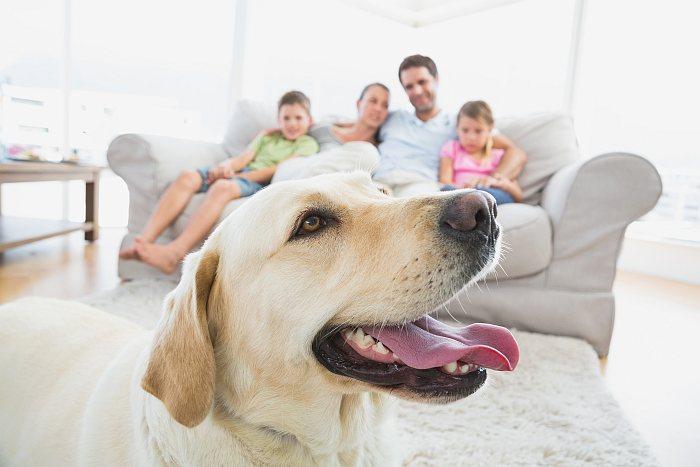 hund anschaffung infos tipps. Black Bedroom Furniture Sets. Home Design Ideas